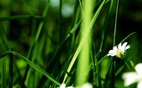 Обои растение, цветок, стебель