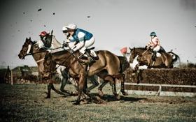 Обои horses, mud, jockey, obstacle, horse race