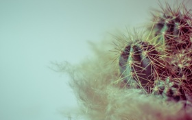 Обои растение, кактус, иголки, колючки