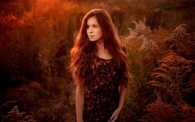 Обои девушка, закат, природа, кареглазая
