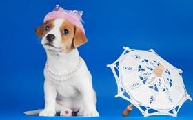 Обои зонтик, собака, щенок