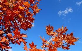 Обои листья, осень, небо