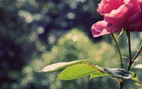 Обои листья, лепестки, цветы