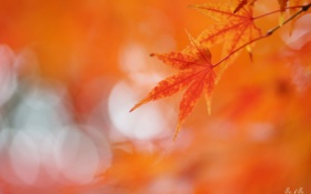 Обои листья, блики, фон, красные