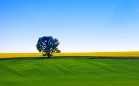 Обои поле, небо, природа, дерево