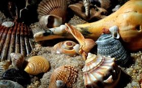 Обои песок, море, аквариум, дно, раковина, ракушки