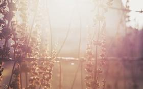 Картинка растение, солнечный, свет, трава, проволока