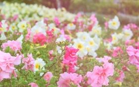 Обои сад, парк, цветы
