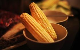 Обои кукуруза, желтая, овощ