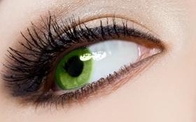 Обои зеленый, ресницы, макияж, зрачок, женский глаз