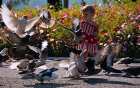 Обои птицы, голуби, девочка