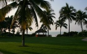 Обои трава, пейзаж, путешествия, пальмы, отдых, остров, утро