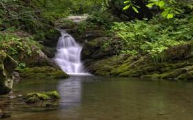 Обои лес, ручей, водопад