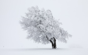 Обои зима, снег, природа, дерево