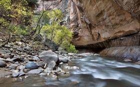 Картинка деревья, река, ручей, камни, скалы, каньон, Zion National Park