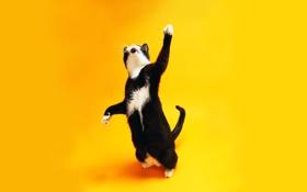 Картинка кот, желтый, котенок, cat, фон, кошка
