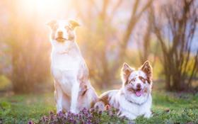 Обои собаки, свет, природа