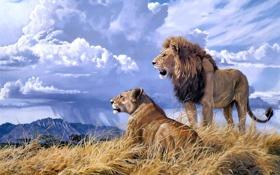 Обои животные, облака, гора, лев, живопись, львица, Lindsay B. Scott