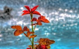 Картинка листья, осень, блеск, растение, отражение, вода
