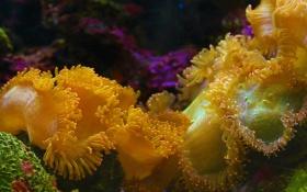 Картинка природа, морской анемон, краски, Таиланд, океан