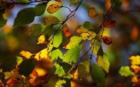 Обои осень, листья, свет, ветка, боке