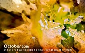 Картинка осень, листья, желтый, листва, месяц, октябрь, 2012