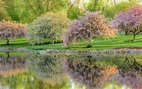 Картинка деревья, пруд, парк