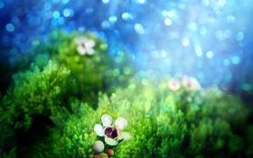 Обои цветок, light tasting, свет, мох, игра