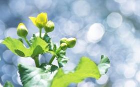 Обои зеленые, лист, листочки, лето
