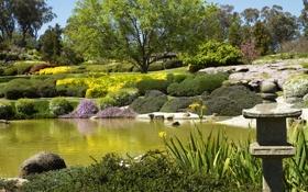 Обои камни, пруд, Cowra Japanese Garden, трава, Австралия, кусты, деревья