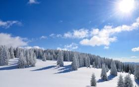 Картинка зима, лес, солнце, снег, деревья