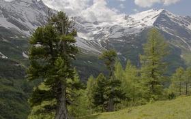 Картинка небо, снег, деревья, горы, Австрия