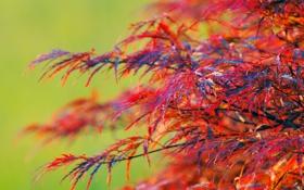 Обои природа, дерево, листва, куст, красная