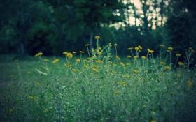 Картинка лес, цветы, желтые, зеленый фон