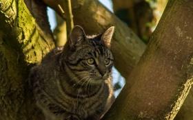 Обои кошка, тень, мордочка, на дереве