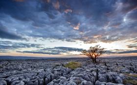 Картинка поле, пейзаж, закат, камни, дерево