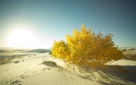 Обои песок, деревья, фото, дерево, пустыня, пейзажи, пустыни