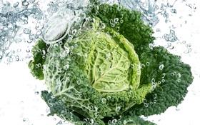 Обои капли, Cabbage, water, drops, vegetable, вода, свежесть