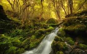Картинка лес, деревья, камни, водопад, мох