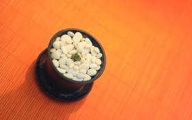 Обои камни, фон, растение, маленький, кактус, горшок, камушки