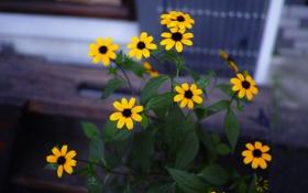 Обои листья, цветы, жёлтые
