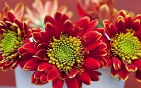 Картинка корзина, Цветы, букет