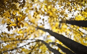Картинка autumn, bokeh, fall, swirling, forecast for gold