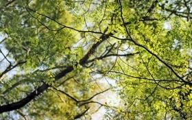 Обои ветки, фото, дерево, лисья, листок, обои, деревья