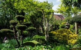 Картинка зелень, трава, деревья, сад, кусты