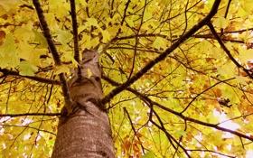 Картинка осень, листья, ветки, дерево, ствол, крона