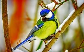Картинка зима, снег, птица, цвет, ветка