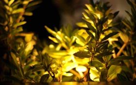 Обои листья, свет, желтый, природа, листва