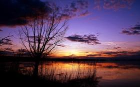 Обои деревья, фото, обои, пейзажи, вид