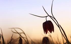 Обои цветок, капли, природа